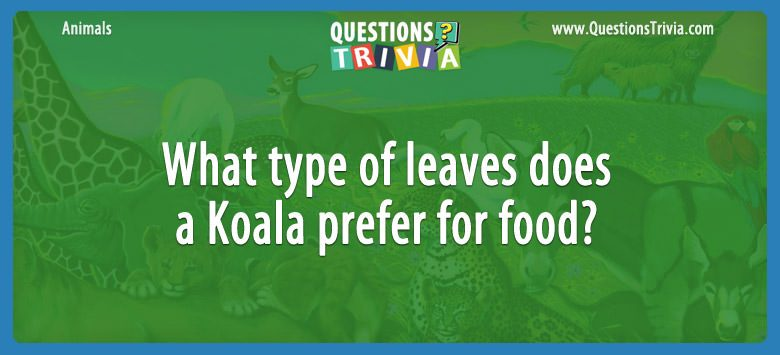 Animals Trivia Questions koala food