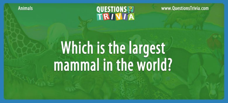 Animals Trivia Questions largest mammal in the world