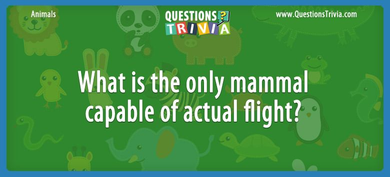 Animals Trivia Questions mammal capable flight