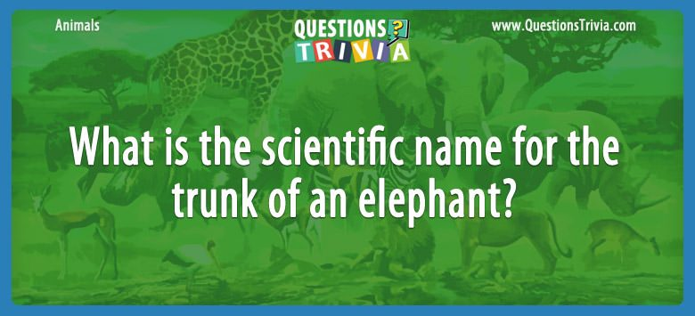 Animals Trivia Questions trunk of an elephant