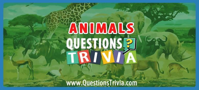 animal trivia category