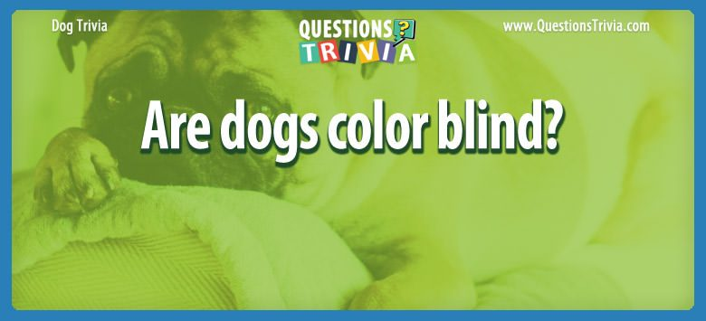 Dogd Trivia Questions Are dogs color blind