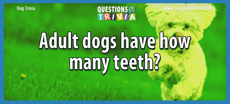 Dogd Trivia Questions adult dogs teeth