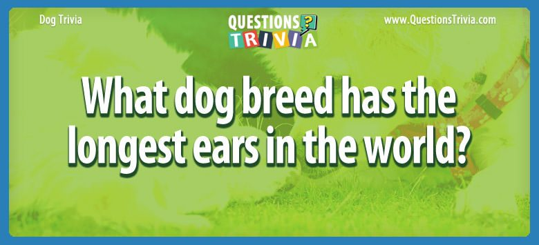 What dog breed has the longest ears in the world?