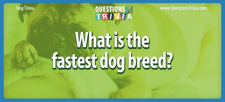 Dogd Trivia Questions fastest dog breed