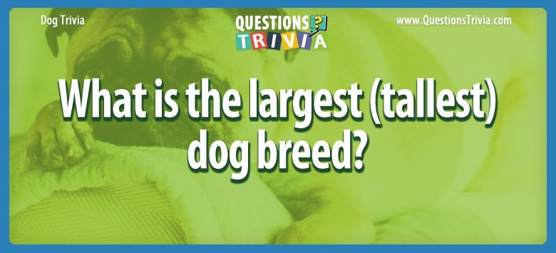 Dogd Trivia Questions largest tallestdog breed