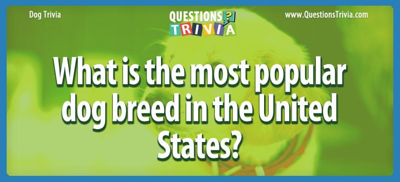 What is the most popular dog breed in the united states?