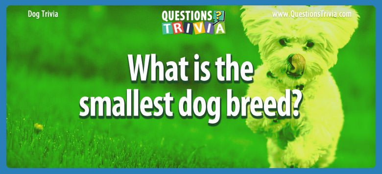 Dogd Trivia Questions smallest dog breed