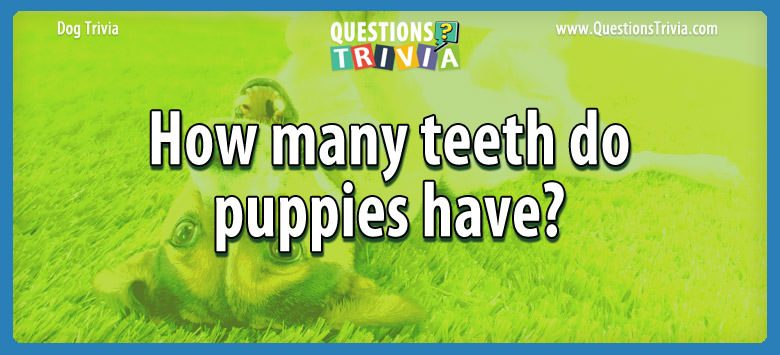 Dogd Trivia Questions teeth puppies have
