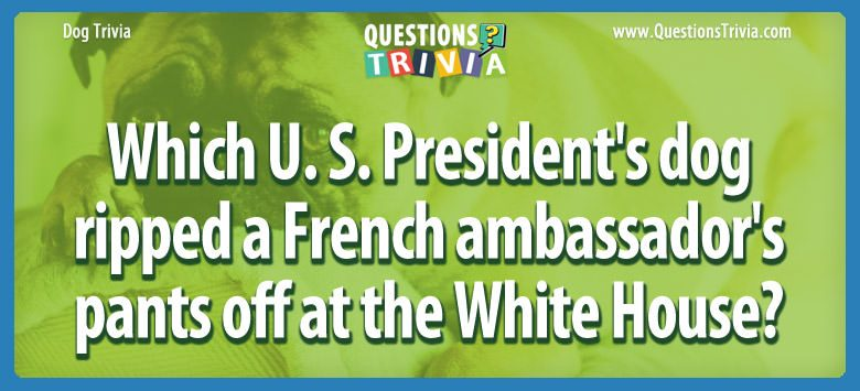 Dogd Trivia Questions us presidents dog ripped