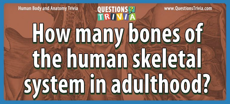 Body Trivia Questions bones human skeletal system adulthood