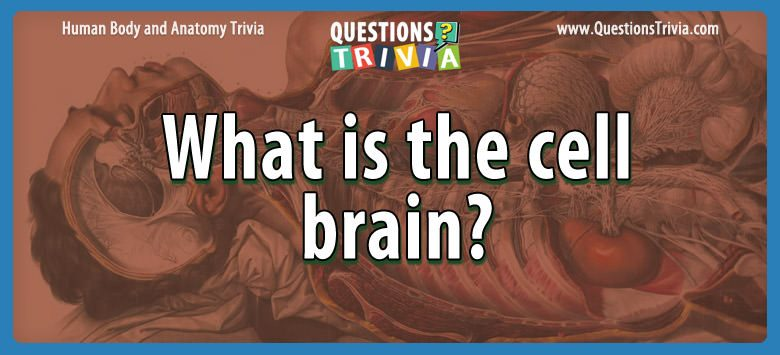 Body Trivia Questions cell brain