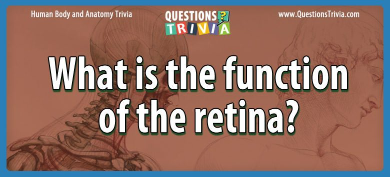 Body Trivia Questions function retina