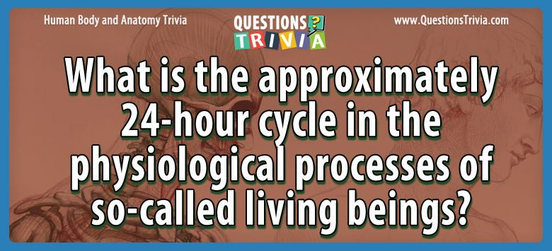 Body Trivia approximately 24 hour cycle physiological processes
