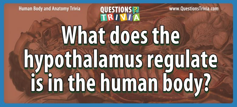 What does the hypothalamus regulate is in the human body?