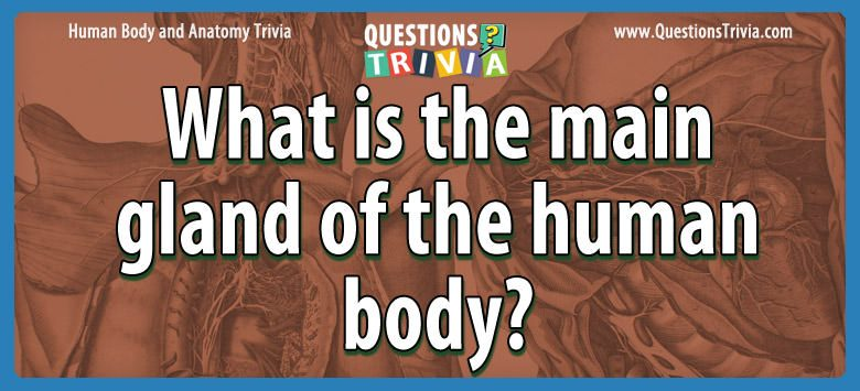 Body Trivia main gland of the human body