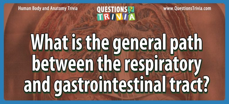 What is the general path between the respiratory and gastrointestinal tract?