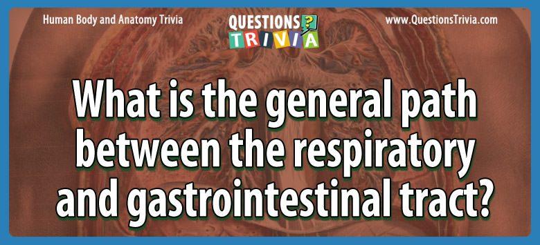 Body Trivia respiratory gastrointestinal tract