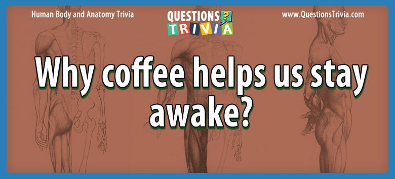 Body Trivia coffee helps stay awake
