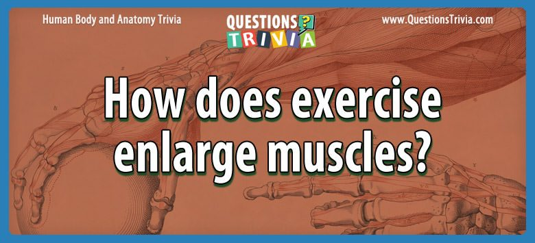 Body Trivia how does exercise enlarge muscles