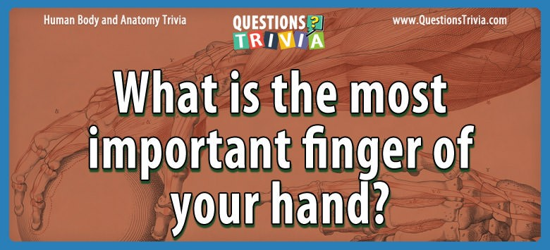 What is the most important finger of your hand?