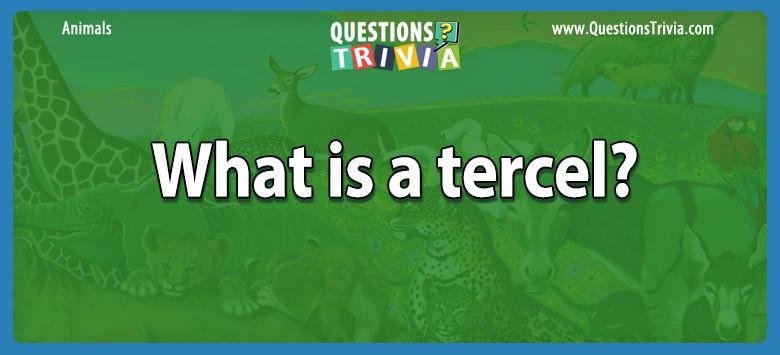 Animals Questions Tercel
